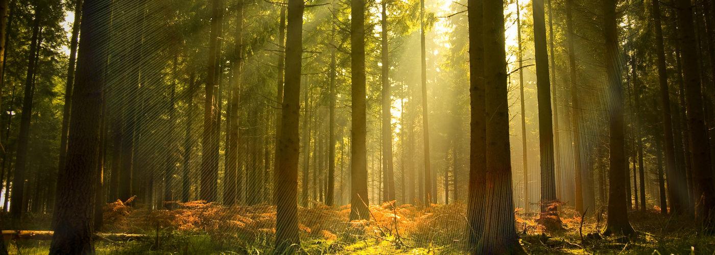 Systemy ochrony lasów